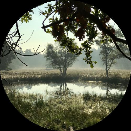 Retraite boshuisje - Katrien de Jong