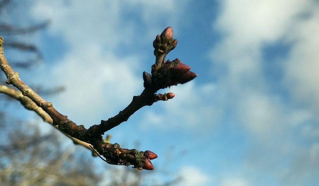Wat gebeurt er in de lente? - Katrien de Jong